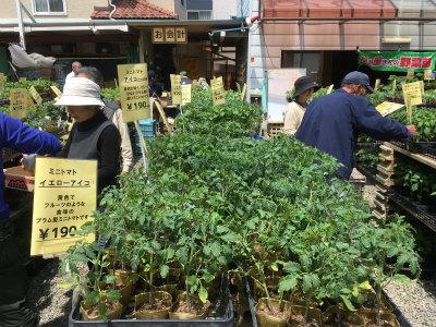 野菜苗販売2