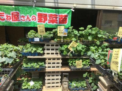 タネ屋さんの野菜苗
