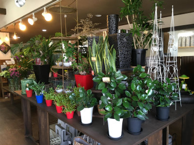 サンスベリアなど観葉植物