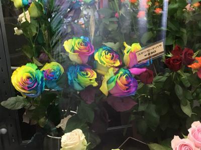 スタンダード薔薇