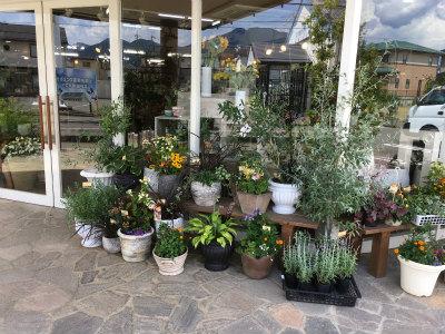 お店入口の鉢植え