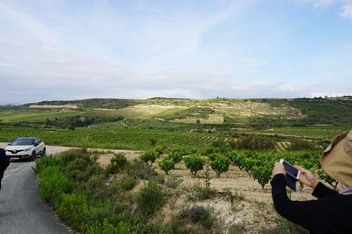 リオハの葡萄畑