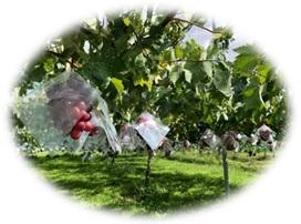 果樹園イメージ01