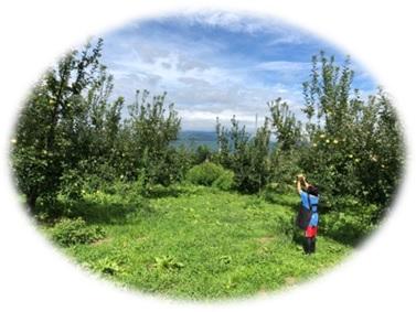 果樹園イメージ02