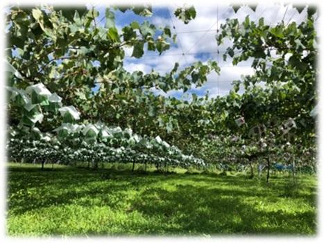 果樹園イメージ04