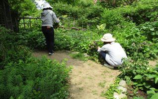 5月14日第2回ガーデンづくり講習会写真3