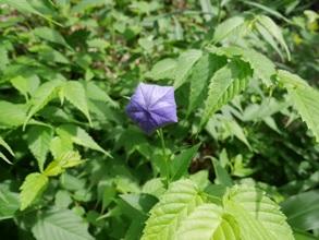 高原の花2