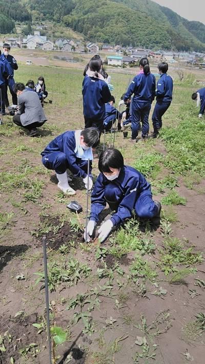 新潟市立中之口中学校 農業体験